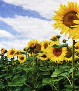 Июль: пора цветения