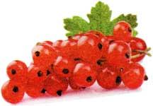 красной смородины