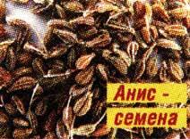 семена и масло аниса