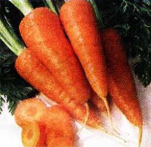 Дайкон и морковь