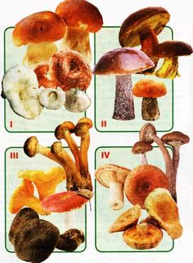 По питательности все грибы