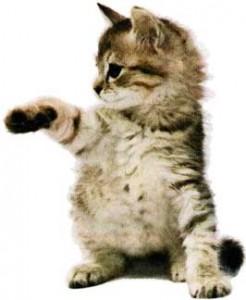 Когда кот - хозяин...