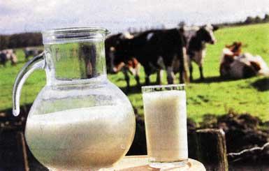Молоко превращается...