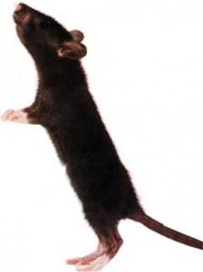 пролезет и мышь