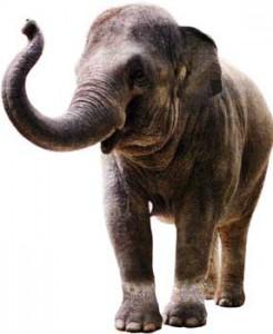 Человек-слон
