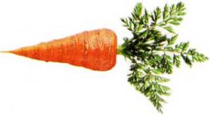 Морковку лучше