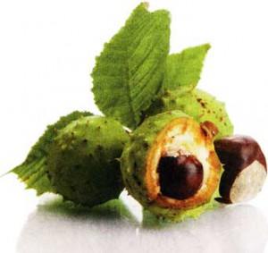 плодов каштана конского