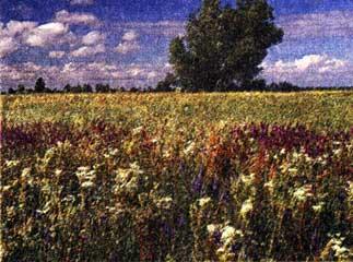 использовании трав