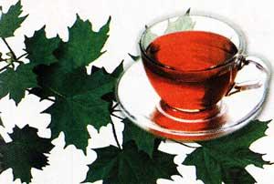 использовать листья клена