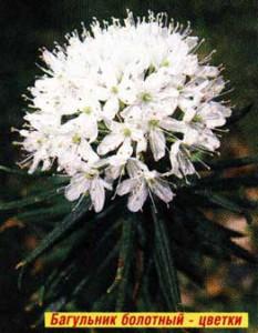 Масло из цветков