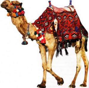 Синдром верблюда
