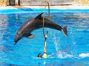 Эффект дельфина