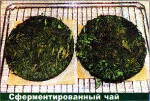 Листья ферментировать