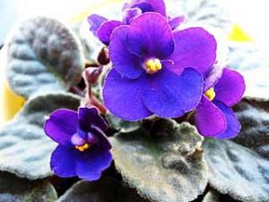 энергия цвета растений