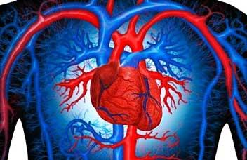 Здоровье сердца и сосудов
