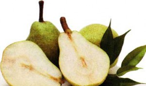 плоды и листья груши