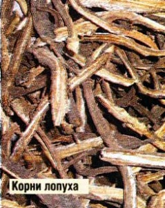 корни лопуха