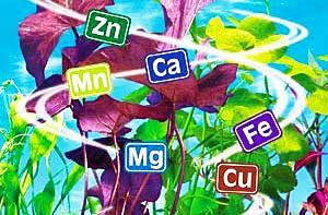 микроэлементы содержатся