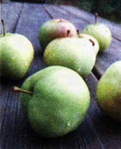 груш и яблок