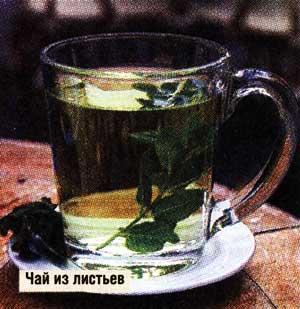 Чай из листочков бузины