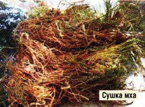 кукушкин мох