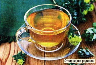 пью золотой корень