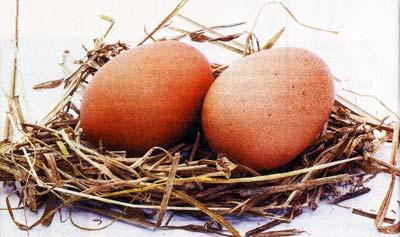 Лечение живым веществом куриного яйца