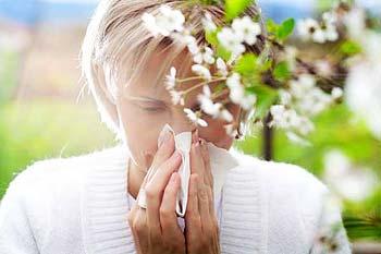 заболевают аллергией