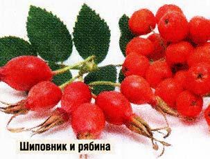 ягоды рябины и плоды шиповника