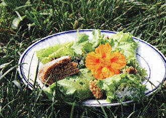 растительную пищу
