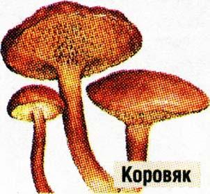 Чем богаты грибы