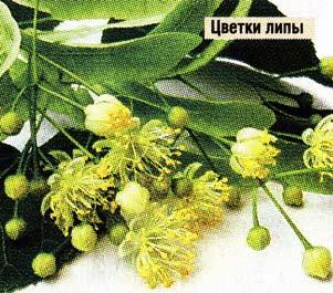 настои из цветков липы