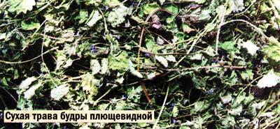 травы будры