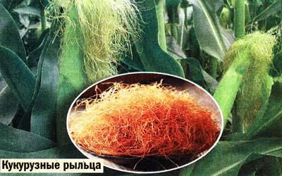 кукурузных рыльцев